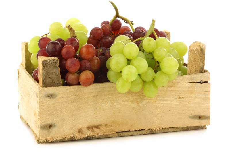 Ovoce a zelenina - firmy podniky úřady Plzeň